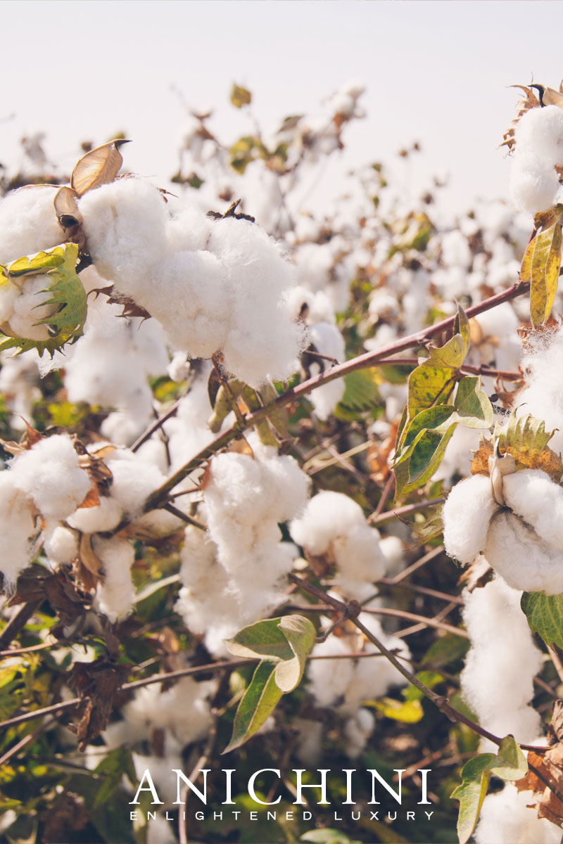 The Truth About Egyptian Cotton